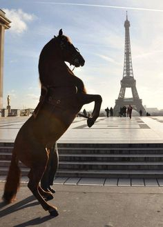 An equine salute to the Eiffel Tower.