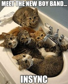 Here is a collection of 25 funny photos/memes. If you have something to share and want to be featured submit your photos HERE. Funny Photo Memes, Funny Photos, Funniest Photos, Cool Cat Trees, Cool Cats, Kittens Cutest, Cats And Kittens, Cat Tree House, Original Memes