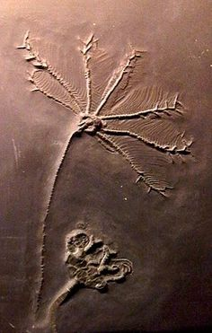 Crinoid fossil would look great in  caterpillar stitch on a cover