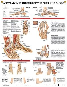 Anatomy and Injuries of the Foot and Ankle anatomy poster shows medial, frontal, lateral, and plantar views as well as a cross section.