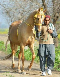 Man walking his horse.