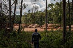 Financial Regulation, Environmental Protection Agency, Amazon Rainforest, Greenhouse Gases, Barack Obama, Ny Times, Climate Change, Wildlife, United States