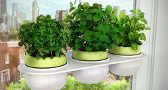 Todo lo que has de saber para cultivar hierbas aromáticas dentro de casa