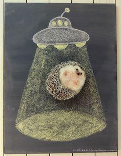 ハリネズミ★まるたろう (hedgehogdays) note