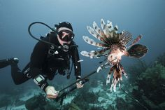 Lionfish and Friends: How Chefs Tackle Invasive Fish