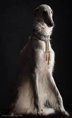 a borzoi by Paul Croes