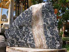 Orbicular granite | Geology IN