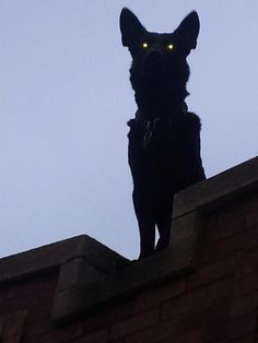 very creepy thing to have on the roof looking down on t-o-ters. halloween decorations horror Hail to the Ancient Dreams Alluka Zoldyck, Arte Alien, Arte Obscura, Arte Horror, Macabre, Halloween Fun, Halloween Drawings, Halloween House, Halloween Decorations