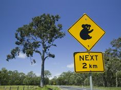 Queensland, Fraser Coast, Maryborough, Koala Crossing Sign on the Bruce Highway, Australia 写真プリント