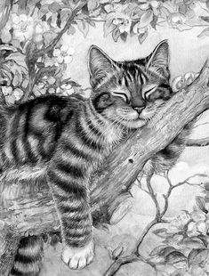 Cat in Tree - Cat in Tree - Pencil Drawings Of Animals, Animal Sketches, Art Drawings Sketches Simple, Realistic Drawings, Cat Drawing, Painting & Drawing, Cat Coloring Page, Colouring, Cat Tattoo