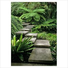 Flight of steps with change in direction floating through foliage - Australia