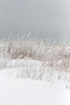 sneeuw, zee, strand
