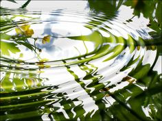 the pond water always fascinated me. Water Ripples, Water Waves, On Golden Pond, Pond Life, Lily Pond, Water Art, Water Reflections, Water Lilies, Monet