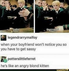 no drarry, I don't ship but angry blond kitten is by far the most accurate description of Draco i've ever heard Draco Harry Potter, Harry Potter Ships, Harry Potter Universal, Harry Potter Tumblr Funny, Draco Malfoy Memes, Harry James Potter, Harry Potter Anime, No Muggles, Yer A Wizard Harry