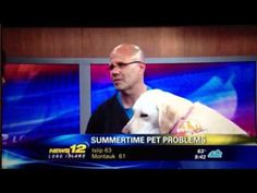 The Caring Vet on News 12 - Animal Island : Dr. Michel A. Selmer discusses Summertime Pet Problems.