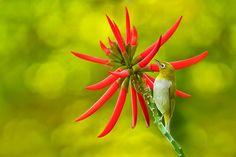 Bird and Red Flower by Sue Hsu