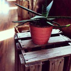 Pallet tabouret, flower pot, reclaimed wood