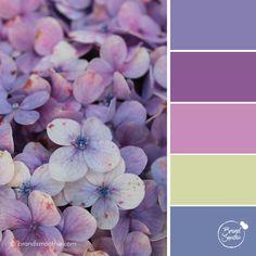 Purple Petals colour palette by Brand Smoothie Yarn Color Combinations, Colour Schemes, Color Patterns, Purple Color Palettes, Colour Pallette, Purple Palette, Color Harmony, Color Balance, Lila Palette