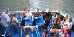 CANINE CRUISE! We love boats. We love dogs. So it's only natural we would bring the two together! Bring Fido and cruise the Chicago River and Lake Michigan on Chicago's only cruise for dogs. $26.61 (adults); $10.09 (kids); $7.34 (dogs) + tax. Tickets: www.mercurycruises.com/tours/