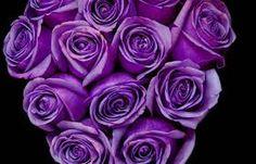 Image result for dark purple roses images
