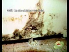 Mold In Bathroom Bad For Health mold removal contractor arkansas we present our fantastic services