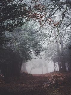 A misty forest with rotting leaves on its floor and frozen branches above