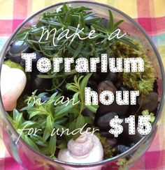 We made a lush terrarium using herbs for under $15. Learn how to make your own herb terrarium!