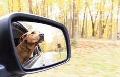 Transporting a pet can be hazardous especially if Fido or Fifi is not properly restrained