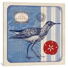 """Breakwater Bay Sea Bird I Textual Art on Wrapped Canvas Size: 12"""" H x 12"""" W x 1.5"""" D"""
