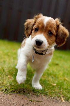 Top 5 of The Rarest Dog Breeds