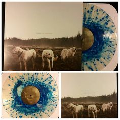 Foxing - The Albatross | Blue in Clear w/ Blue Splatter | 500 #vinyl #vinylcollective #vc #vinylparty #foxing #thealbatross #dealer #triplecrownrecords #triplecrown #poppunk #punk #punkrock #emo #indie #rock #music #records #nowspinning #obsessed #love #melodicallydeaf #posthardcore #folk #folkrock #acoustic #postrock by melodicallydeaf