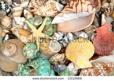 colorful pictures of seashells   Colorful Seashells Background And Star Stock Photo 13112668 ...