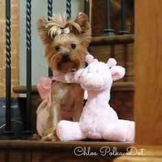 Me and my stuffed animal.