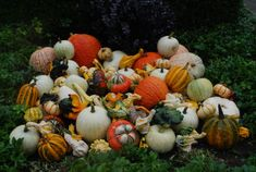 Detroit Garden Works Autumn Art, Autumn Theme, Ornamental Cabbage, Bushel Baskets, Garden Works, Fall Containers, Plant Fungus, Fall Vegetables, Fall Fruits