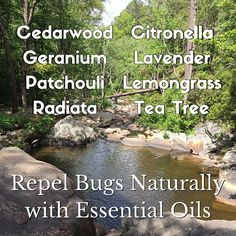 Easy DIY recipe for keeping bugs away naturally!  www.heavenscentaromashop.com