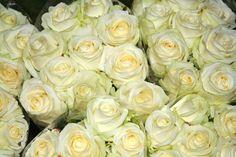 Ja arriben les primeres flors!  #insidetempsdeflors #tempsdeflors Roses, Flowers, Plants, Instagram, Pink, Rose, Florals, Planters, Flower