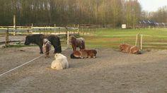 Sasha, Mickey, Astrid, Claire, Iris en Madelief