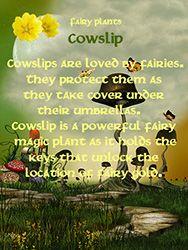 Fairy Plants - Cowslip