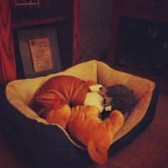 hard time finding him in his bed with his toys! Shar Pei, Bean Bag Chair, Toys, Bed, Home Decor, Activity Toys, Decoration Home, Stream Bed, Room Decor