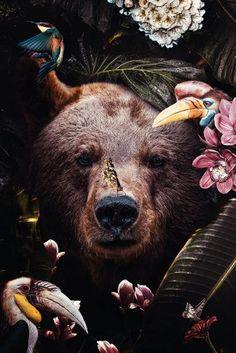 Illustrations Discover The creative impulse! Pretty Animals, Most Beautiful Animals, Beautiful Creatures, Cute Animals, Animal Wallpaper, Nature Wallpaper, Jolie Photo, Spirit Animal, Pet Portraits