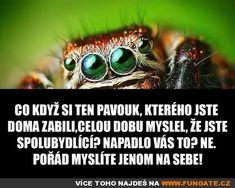Co když si ten pavouk, kterého jste... Humor, Drake, Spiderman, Teen, Lol, Animals, Spider Man, Animales, Animaux