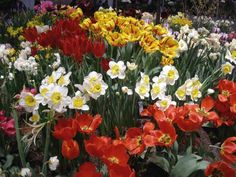 HGTV provides tips on when to plant your spring bulbs.