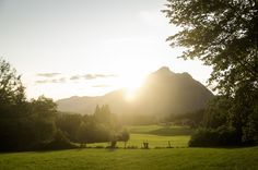 sunset nature vibes