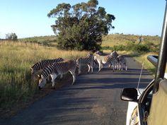 Hluhluwe Imfolozi Game Reserve in KwaZulu-Natal Kwazulu Natal, Game Reserve, Places To Go, Africa, Games, Animals, Animales, Animaux, Gaming
