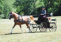arabian carriage  #vancouver #horseshow #loves #arabianhorse #sporthorse