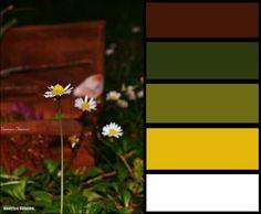 marrò-bianco #earth #color #colors #photo #landescape #beautifoul #nature #lovenature #arcobaleno #luci #light #bordo di una foto