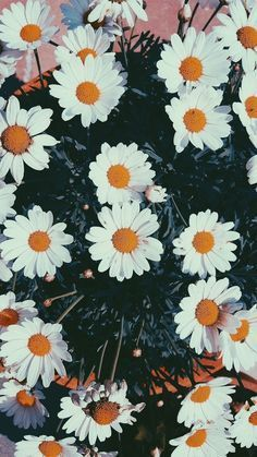 39 Ideas Flowers Photography Wallpaper Phone Wallpapers Daisies For 2019 Tumblr Wallpaper, Screen Wallpaper, Cool Wallpaper, Wallpapers Rosa, Cute Wallpapers, Phone Wallpapers, Flower Backgrounds, Wallpaper Backgrounds, Iphone Backgrounds