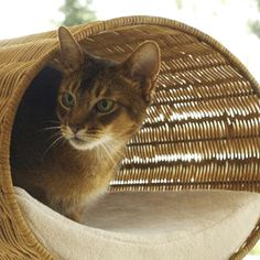 Modern Cat Furniture Design for Function and Attraction