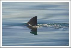Explain why some people may be afraid of sharks. What do you know about sharks?