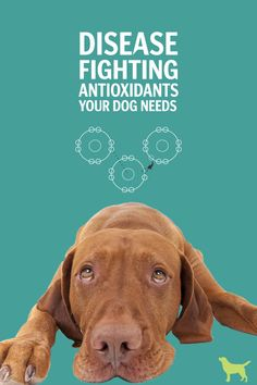 You feed your dog every day … but are you adding in these disease-fighting antioxidants for optimal health?